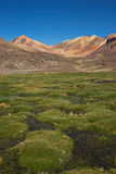 Wetland in the Atacama Stock Photos