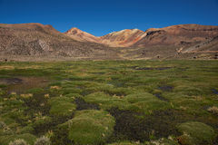 Wetland in the Atacama Stock Photo