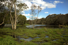 Wetland in Australia Royalty Free Stock Images