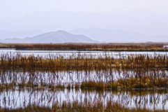 The wetland of autumn Stock Photography