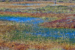 Wetland with autumn colors Royalty Free Stock Photography