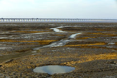 Broad tidal flat, golden seaweed, circular pool Royalty Free Stock Photo