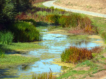 Wetland in the Bay Area. A corner of a picturesque wetland, a winding gravel road on the top royalty free stock images