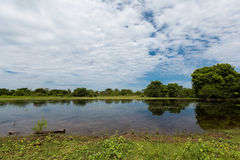 Wetland Royalty Free Stock Photo