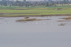 Wetland and Birds. Wetland and the flock of Migratory Birds royalty free stock images
