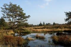 Wetland, Bog, Nature, Ecosystem