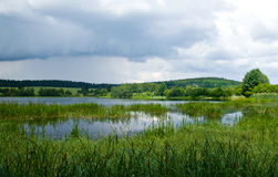 Wetland in a cloudy day Royalty Free Stock Photography