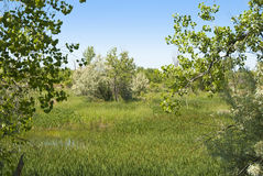 Wetland on the Colorado Prairie Royalty Free Stock Photos