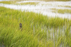 Wetland Conservation. At the Virginia National Seashore Stock Photo
