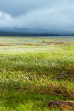 Wetland Conservation Success Royalty Free Stock Photography