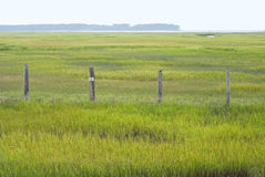 Wetland Conservation in Virginia Stock Photography
