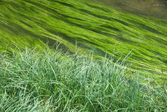 Wetland with Creek  and Grass Stock Photo
