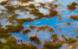 Wetland detail. With moss growing in blue water royalty free stock image
