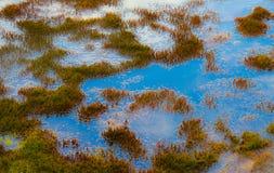 Wetland detail Royalty Free Stock Image