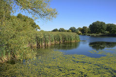 Wetland Detail Stock Image