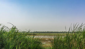 Wetland in dudhua Stock Images