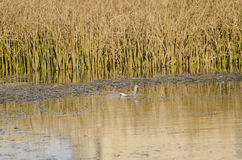 Wetland Ecosystem Royalty Free Stock Photo