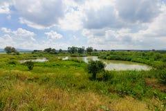 Wetland, En Afek Stock Image