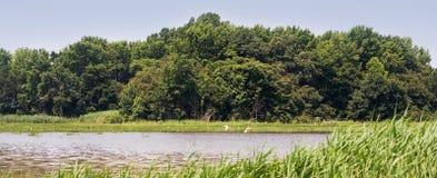 Wetland estuary landscape Stock Image