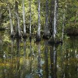 Wetland in Florida Everglades. Royalty Free Stock Photography
