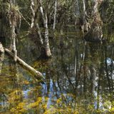Wetland in Florida Everglades. Stock Image