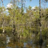 Wetland in Florida Everglades. Stock Photos