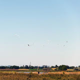 Wetland. flying eurasian spoonbills in autumn. platalea leucorodia. the place is the lake Feher-szik in Tiszavasvari, Hungary. Wetland. flying eurasian Royalty Free Stock Image