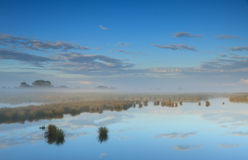Wetland Royalty Free Stock Photography