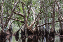 Wetland forest Stock Photography