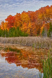 Wetland forest in fall Royalty Free Stock Image