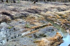 Wetland in the forest, impassable road after flooding. Wetland in the forest impassable road after flooding royalty free stock photo