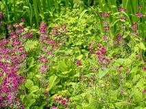 Wetland Garden Stock Images