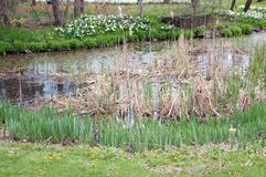wetland and grass Royalty Free Stock Images