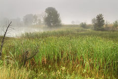 Wetland grasses Stock Photo