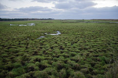 Wetland with green patterns Royalty Free Stock Photo