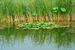 Wetland Stock Images