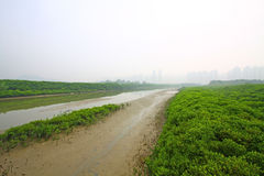 Wetland in Hong Kong Stock Photos