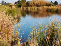 Free Wetland In The Bay Area Stock Photos - 51429823