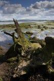 Wetland in Ireland Stock Photos