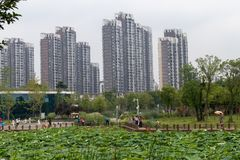 Nanchang like Lake Wetland Park. Wetland is the `kidney of the earth`, and wetlands can effectively remove the pollutants such as nitrogen, phosphorus and heavy Stock Image