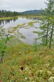 Wetland lake under a gray sky Stock Photography