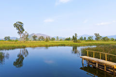 Wetland lake and wooden pier Royalty Free Stock Images
