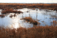 Wetland landscape Royalty Free Stock Images