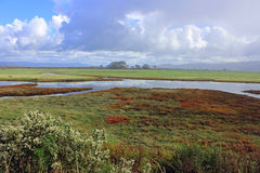 Wetland Landscape. A colorful wetland landscape with a cloudy sky Stock Image