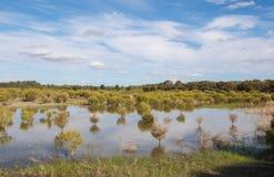 Wetland Landscape Stock Images