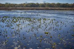 Wetland landscape on Point Pelee conservation area in Ontario, C Stock Photo