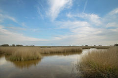 Wetland landscape. Tablas de Daimiel. Ciudad Real. Spain. Royalty Free Stock Images