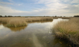 Wetland landscape. Tablas de Daimiel. Ciudad Real. Spain. Royalty Free Stock Photography