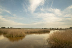 Wetland landscape in warm tone. Spain Stock Photography