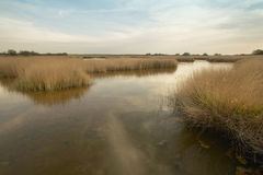 Wetland landscape in warm tone. Spain Stock Images